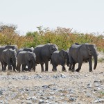 namibia_2016_namibia__dsc2473-ellies-march-to-wh