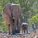 namibia_2016_namibia__dsc4808-dad-and-baby-ellie
